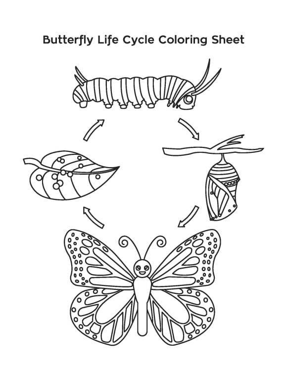 life cycle of a butterfly coloring page craftsactvities and worksheets for preschooltoddler and coloring cycle butterfly life page of a