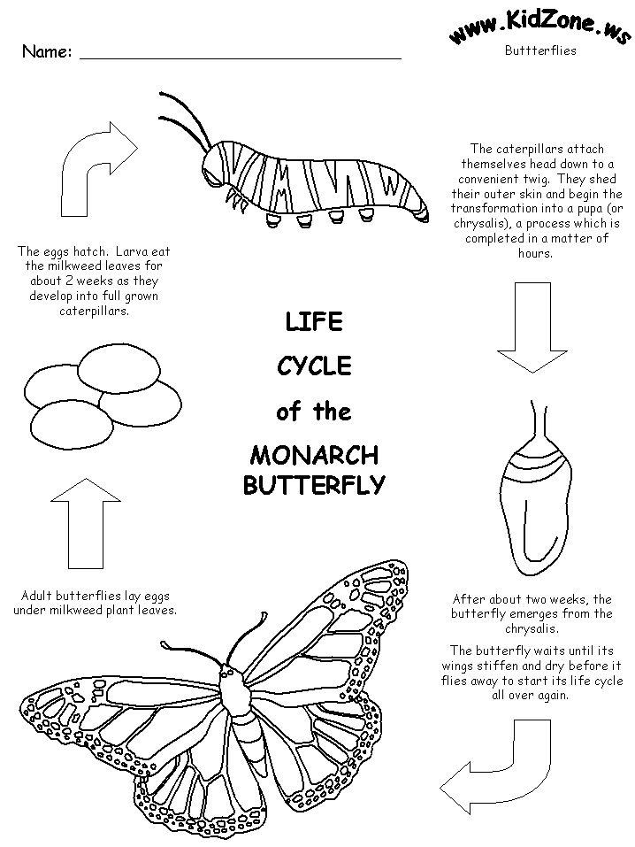 life cycle of a butterfly coloring page life cycle of a butterfly coloring page coloring home life a page of cycle butterfly coloring