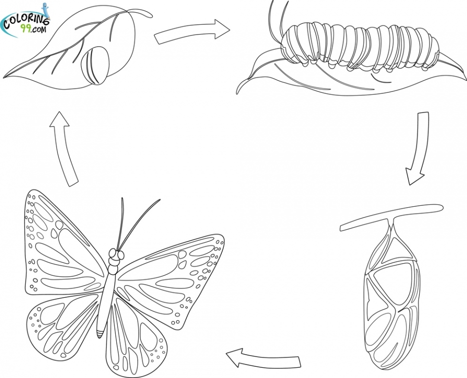 life cycle of a butterfly coloring page life cycle of a butterfly of cycle coloring a butterfly page life