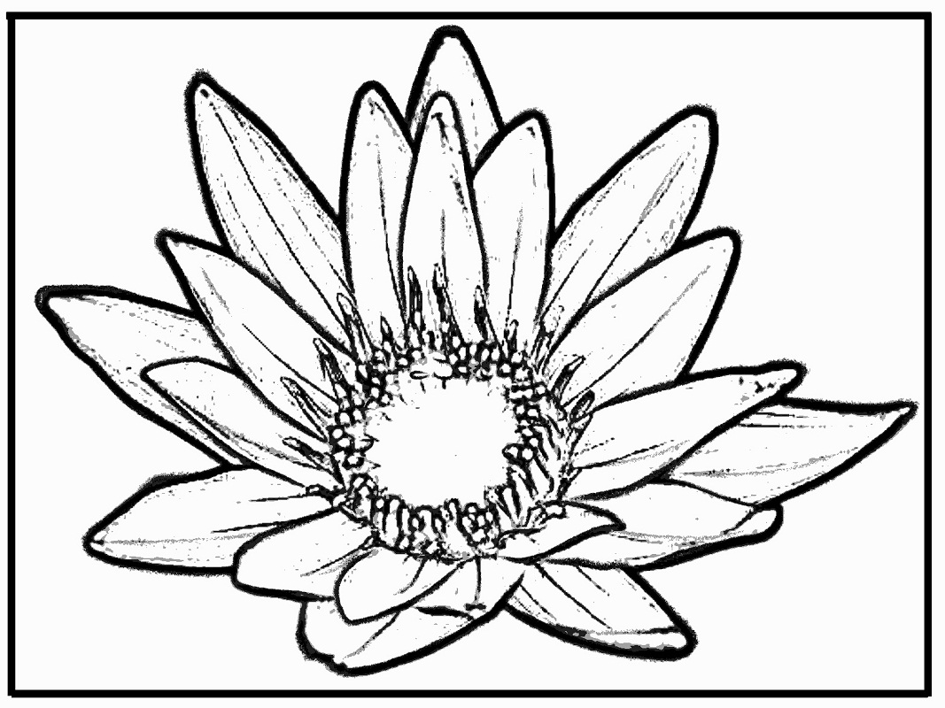 lily coloring pages calla lily coloring page free printable coloring pages lily coloring pages