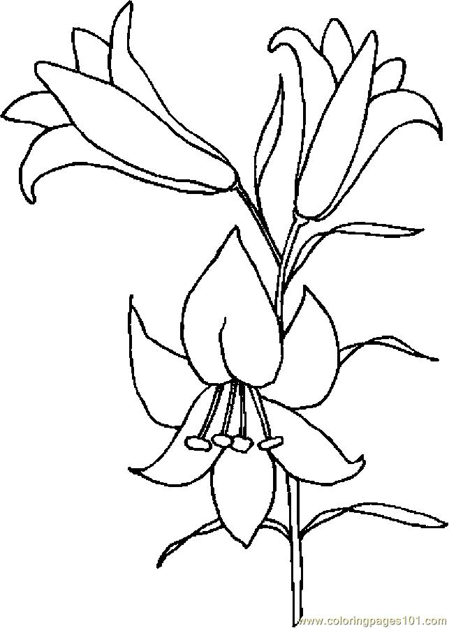 lily coloring pages coloring pages lily 4 natural world gt flowers free coloring pages lily