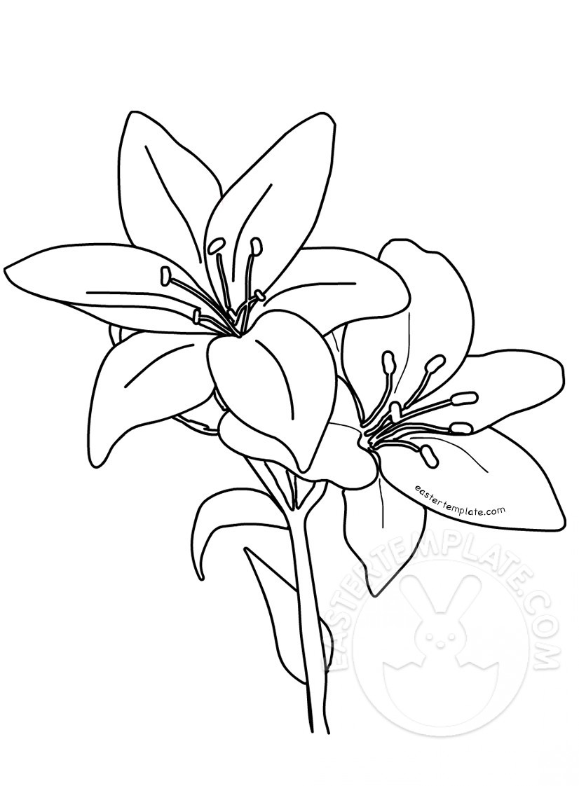 lily coloring pages flower coloring pages pages lily coloring
