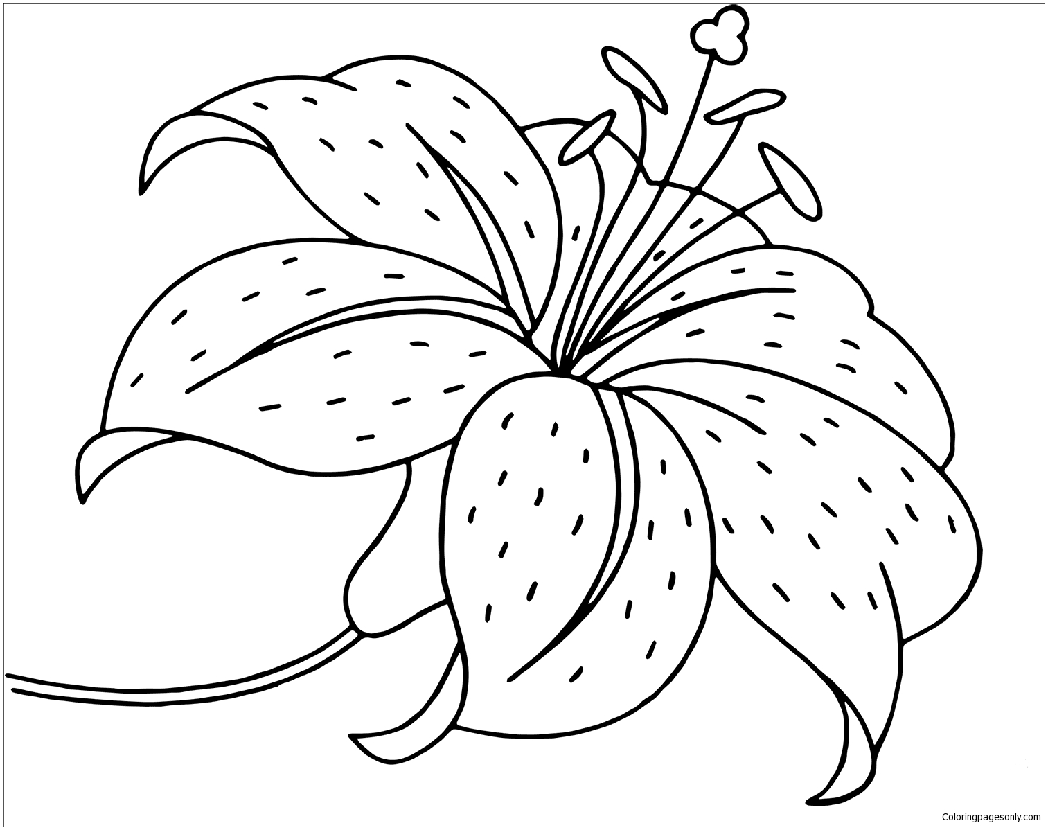 lily coloring pages hemerocallis spp or day lily coloring page free coloring pages lily