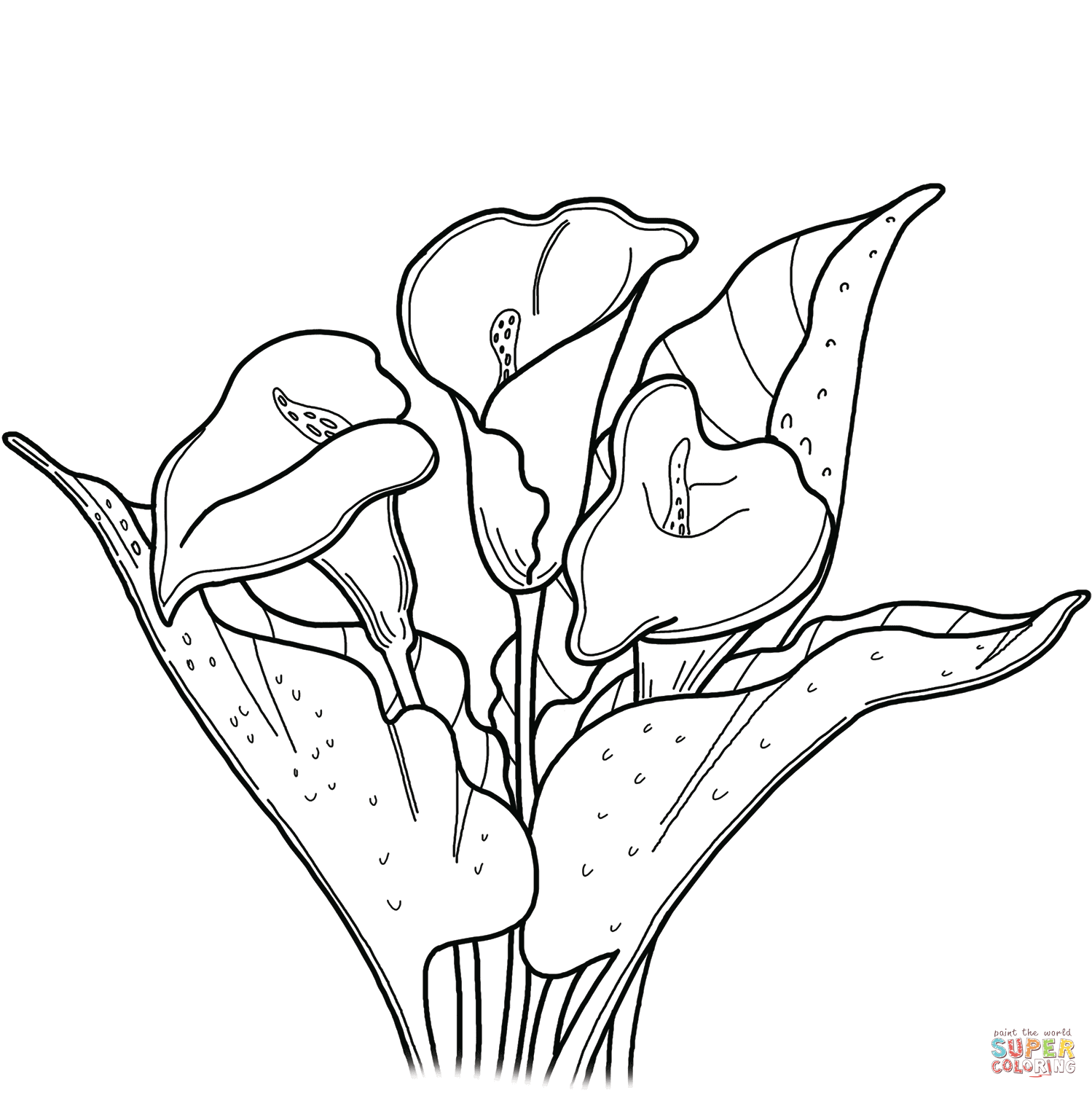 lily coloring pages lily flower coloring page flower coloring pages lily pages coloring