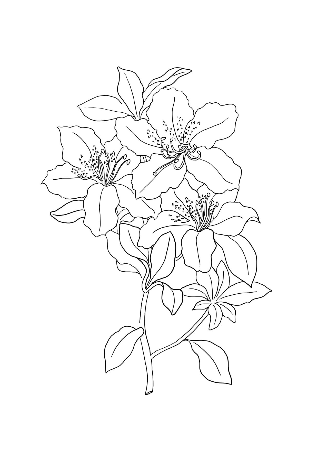 lily coloring pages lily of the valley coloring pages coloring pages to coloring pages lily
