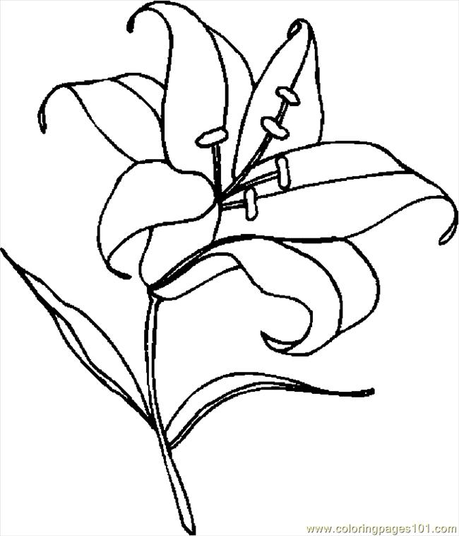 lily coloring pages top 20 printable lily coloring pages online coloring pages coloring lily pages