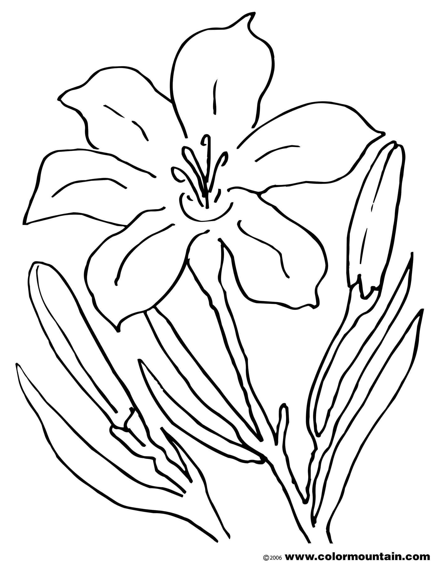 lily flower coloring pages coloring pages lily 11 natural world gt flowers free coloring lily flower pages