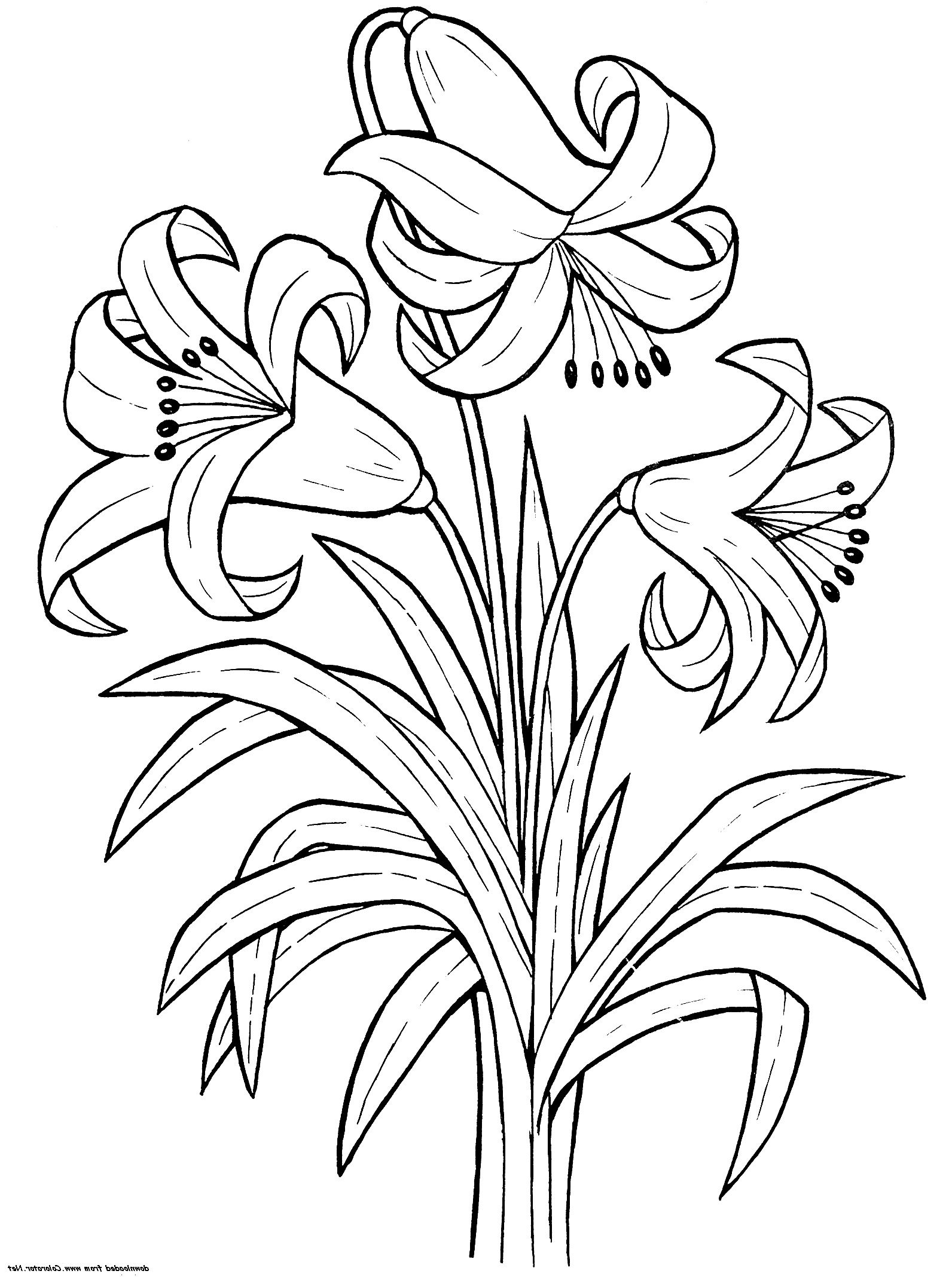 lily flower coloring pages lily flower coloring pages download and print lily flower coloring lily flower pages