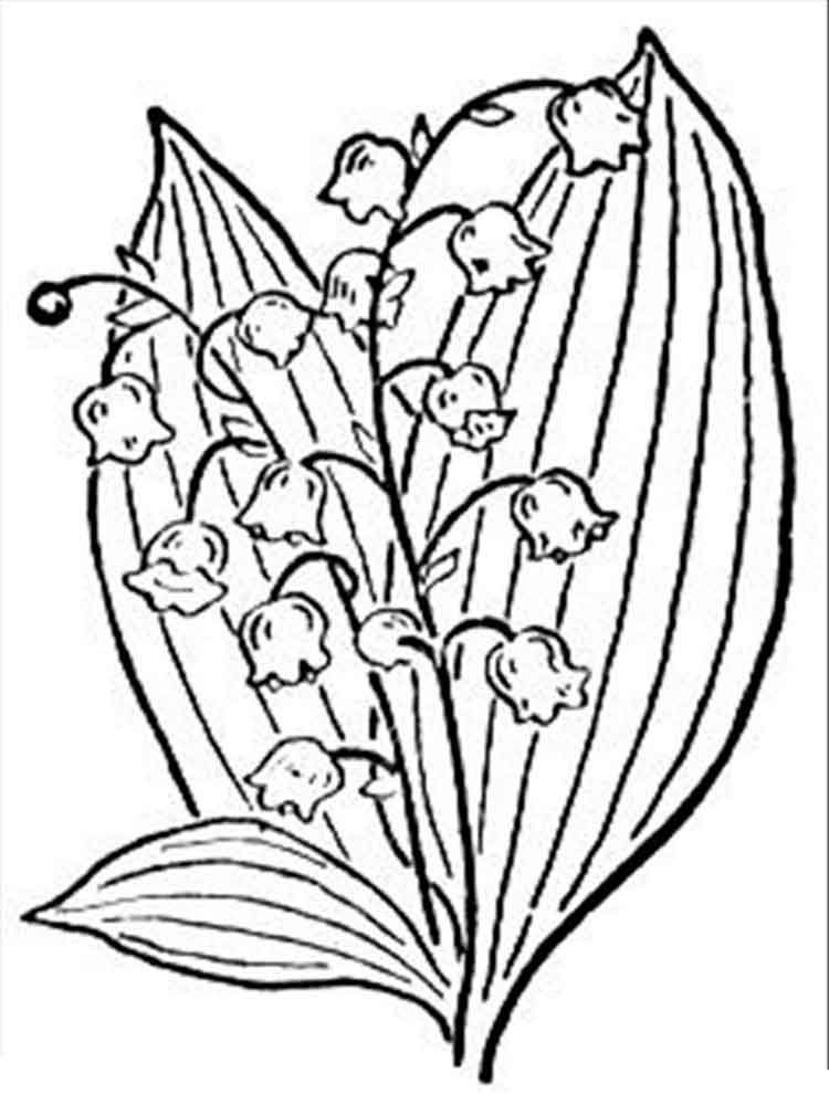lily flower coloring pages lily flower coloring pages download and print lily flower coloring lily pages flower