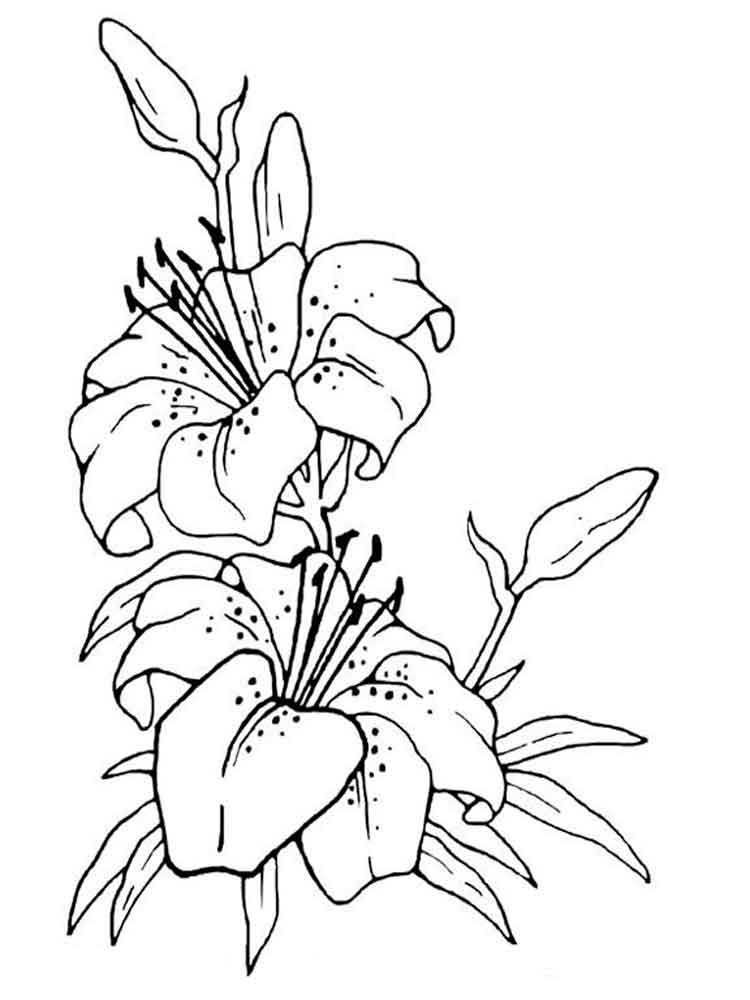 lily flower coloring pages lily flower coloring pages download and print lily flower lily coloring pages flower