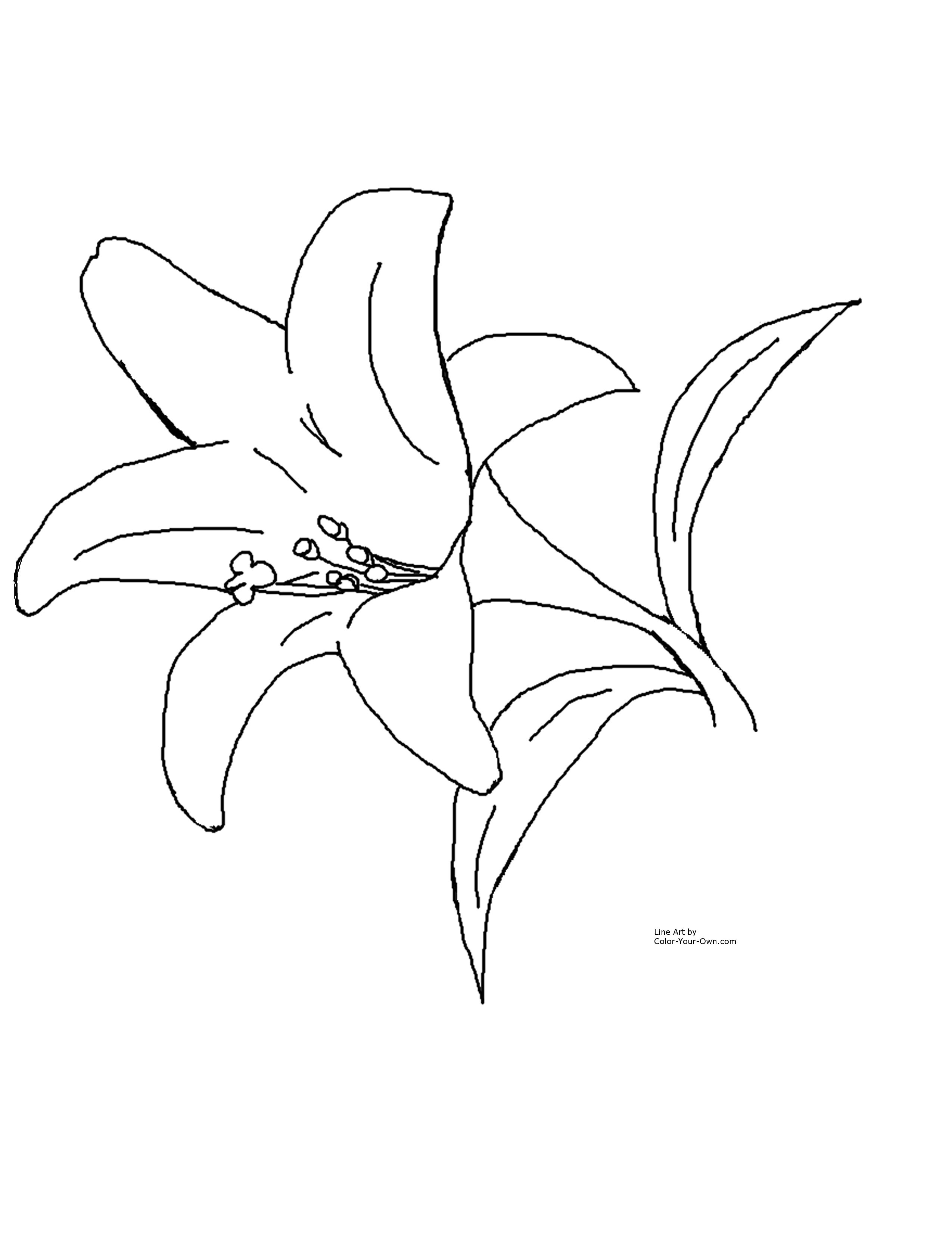 lily flower coloring pages lily flower coloring pages download and print lily flower lily coloring pages flower 1 1