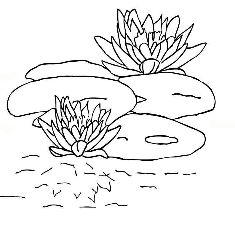 lily pad coloring page free cartoon lily pads download free clip art free clip lily coloring page pad