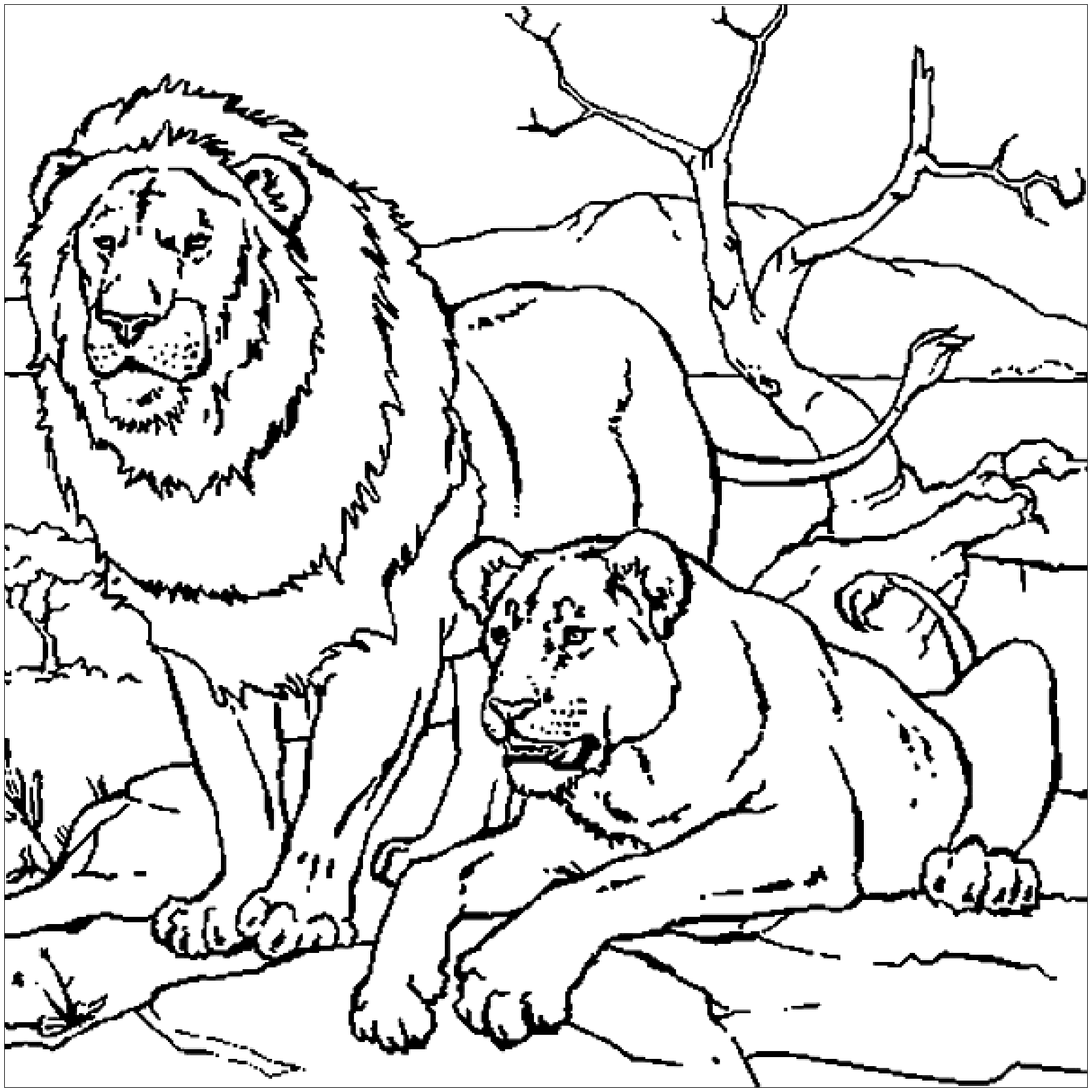 lion coloring sheets lion coloring page for toddler bubakidscom sheets lion coloring