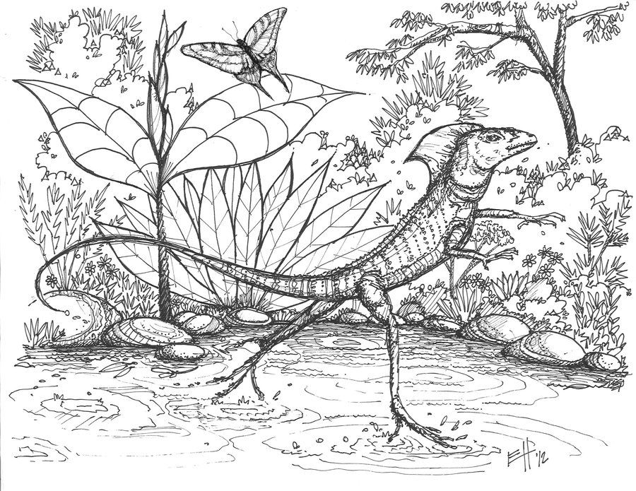 lizard coloring book lizard coloring pages book coloring lizard