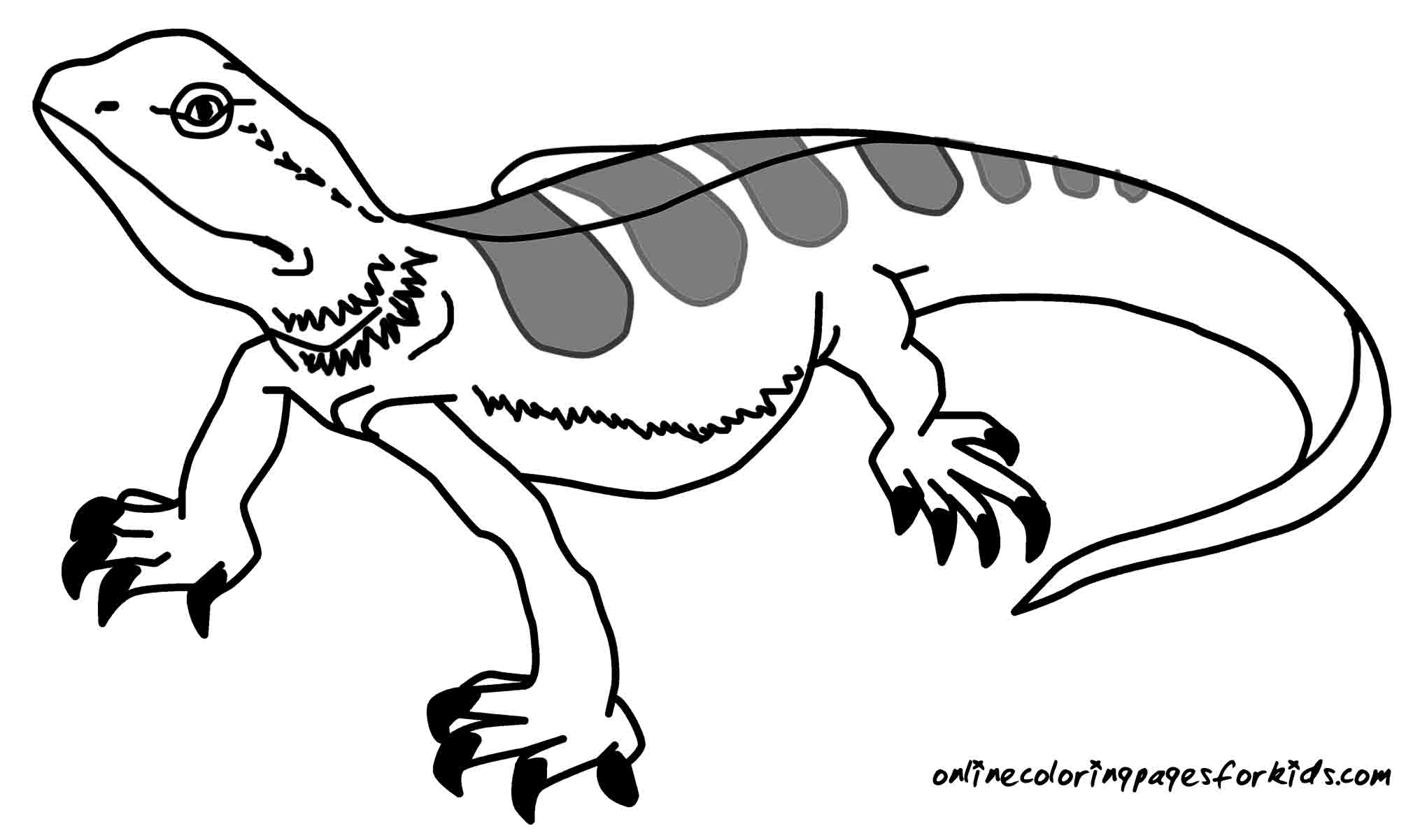 lizard coloring page free lizard coloring pages lizard page coloring