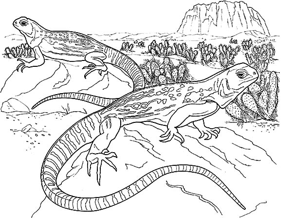lizard pictures to print printable lizard coloring pages for kids cool2bkids lizard to print pictures