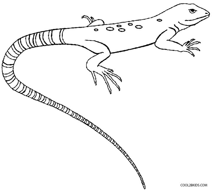 lizard pictures to print printable lizard coloring pages for kids cool2bkids to lizard pictures print