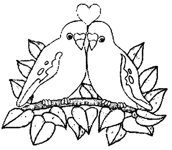 love birds coloring pages bird alphabet coloring pages coloring pages for kids coloring pages love birds
