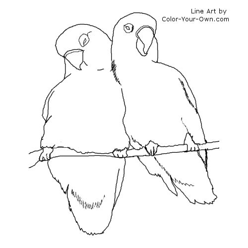 love birds coloring pages download lovebird coloring for free designlooter 2020 pages birds love coloring