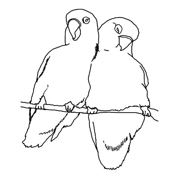 love birds coloring pages love birds love birds sitting on the flowering branch love pages birds coloring
