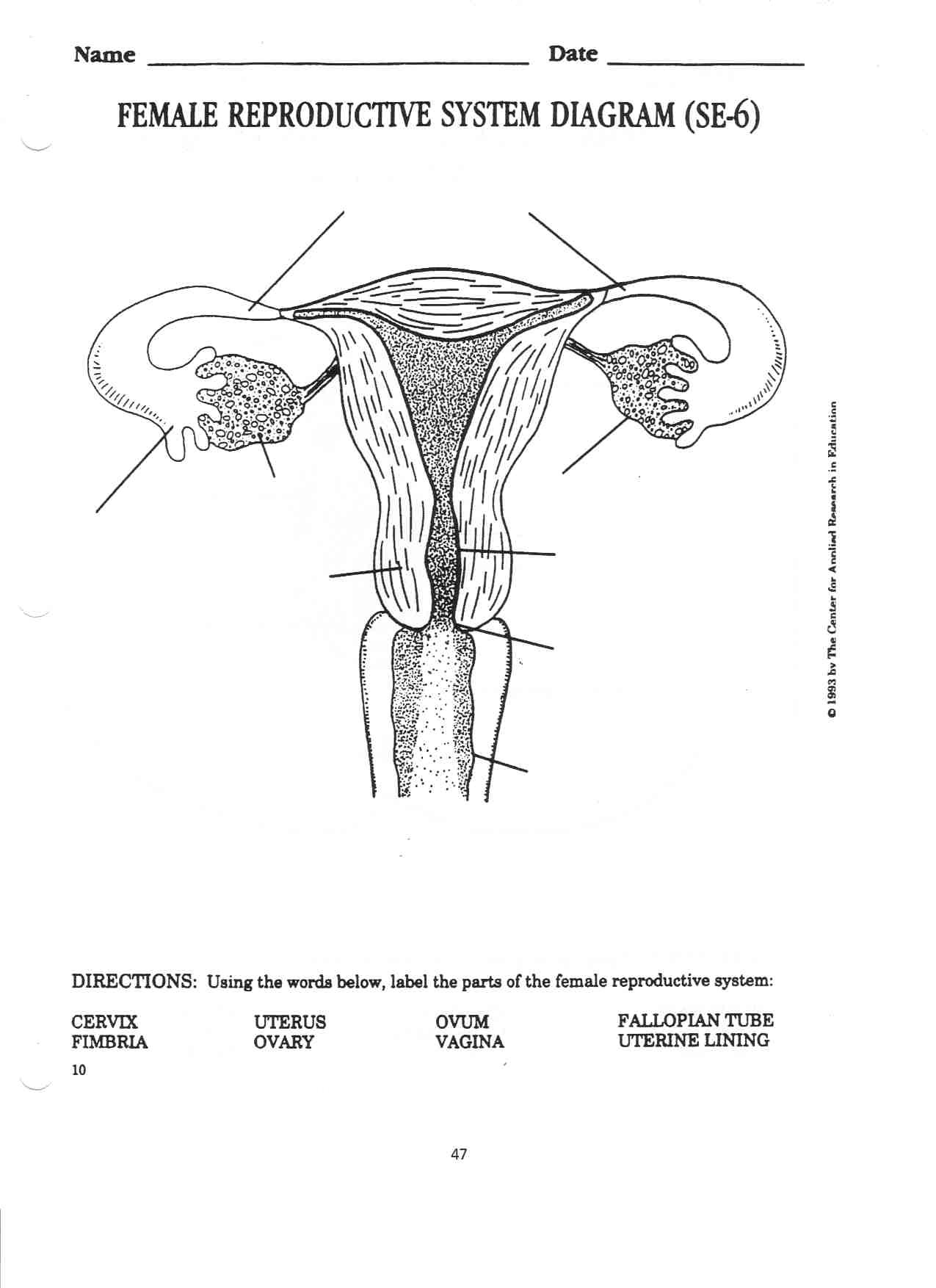 male reproductive system worksheet what are the parts of the male reproductive system human male system reproductive worksheet