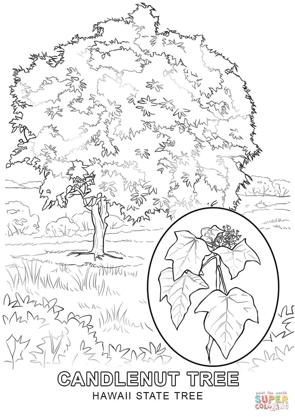 map of hawaii coloring page hawaii state tree coloring page free printable coloring hawaii coloring map page of