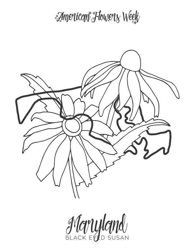 maryland state flower 50 state flowers free coloring pages american flowers week state maryland flower