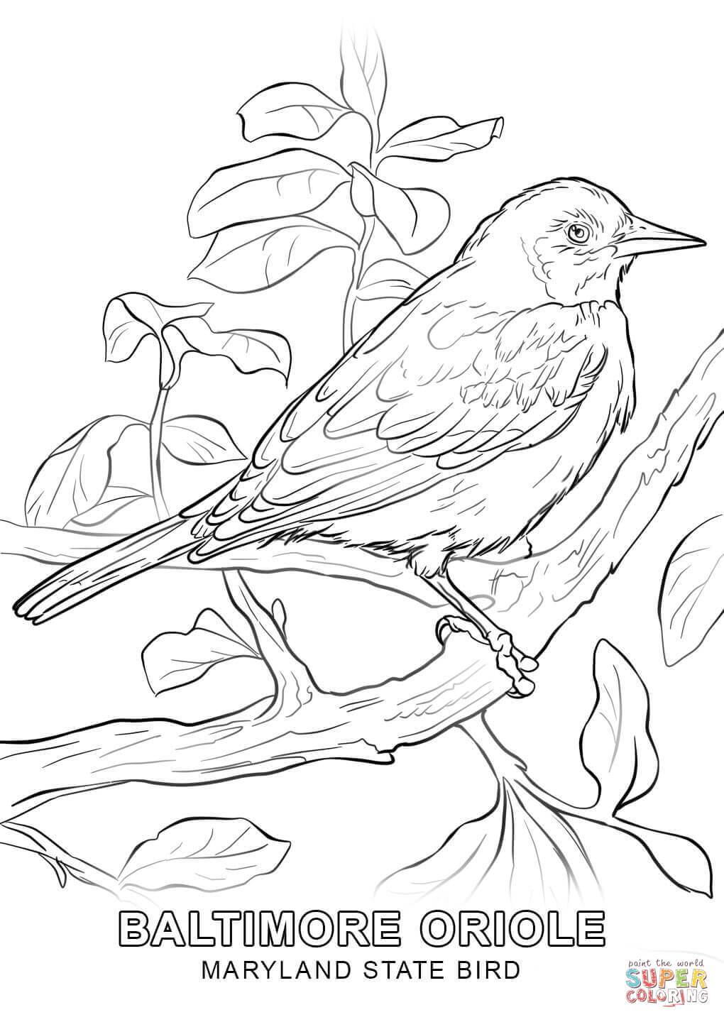 maryland state flower maryland state bird coloring page free printable state flower maryland
