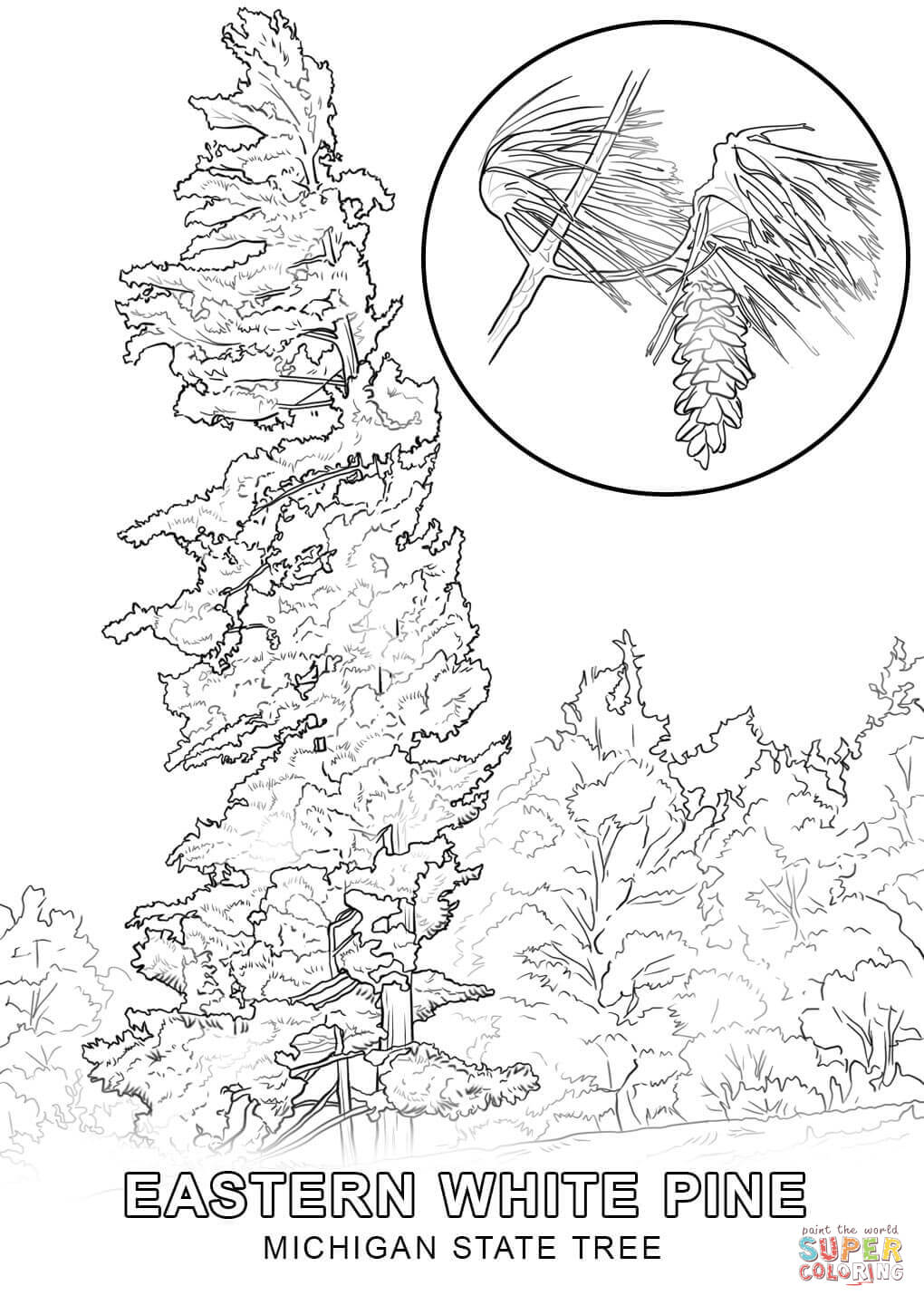 maryland state tree maryland map worksheet coloring page free printable maryland tree state