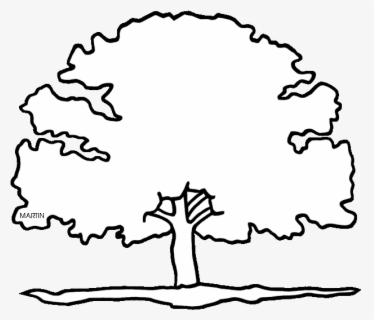 maryland state tree michigan state tree coloring page free printable tree maryland state
