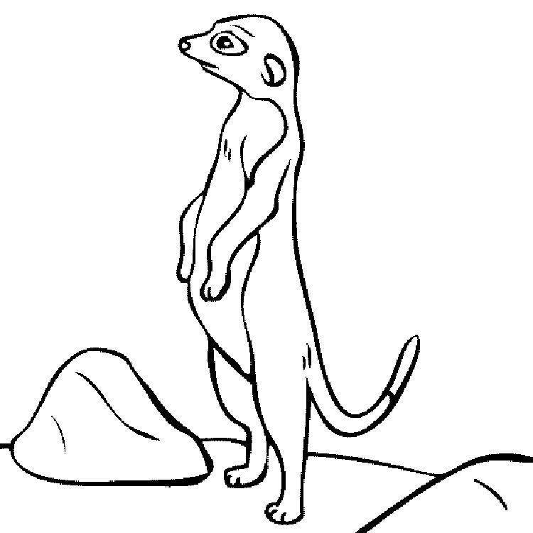 meerkat pictures to colour pin by fun activity on coloring pages for kids animal meerkat to colour pictures