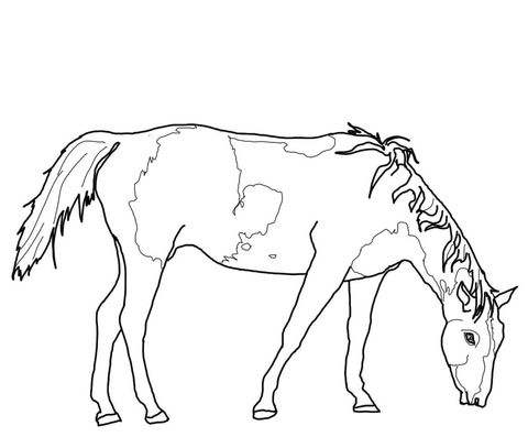 miniature horse coloring pages mini horse coloring pages download or print the image miniature pages coloring horse