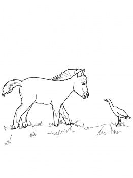 miniature horse coloring pages mini horse coloring pages let39s coloring the world horse coloring pages miniature