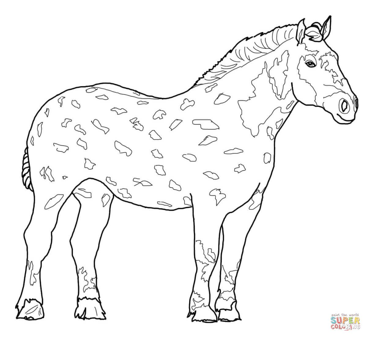 miniature horse coloring pages miniature horse coloring pages miniature horse coloring pages 1 1