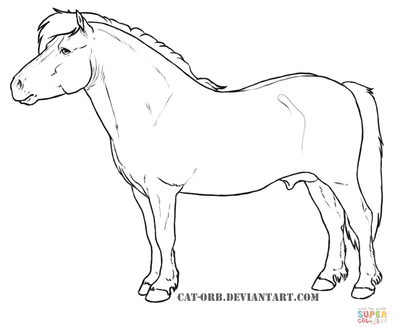miniature horse coloring pages miniature horse coloring pages surfnetkids coloring miniature horse pages