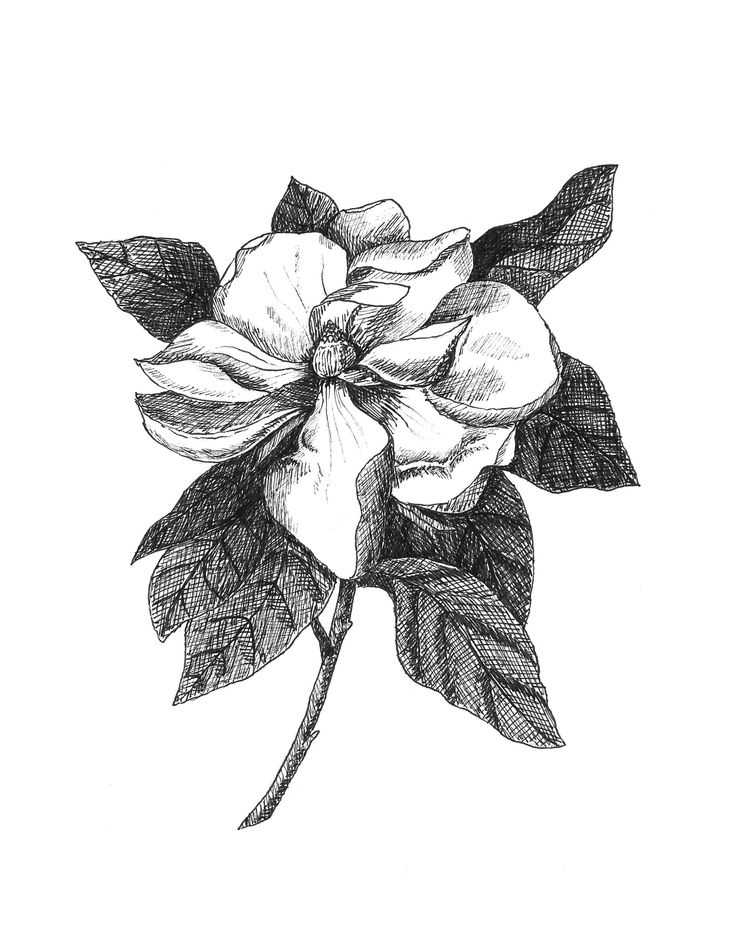 mississippi state flower 50 state flowers coloring pages for kids state mississippi flower