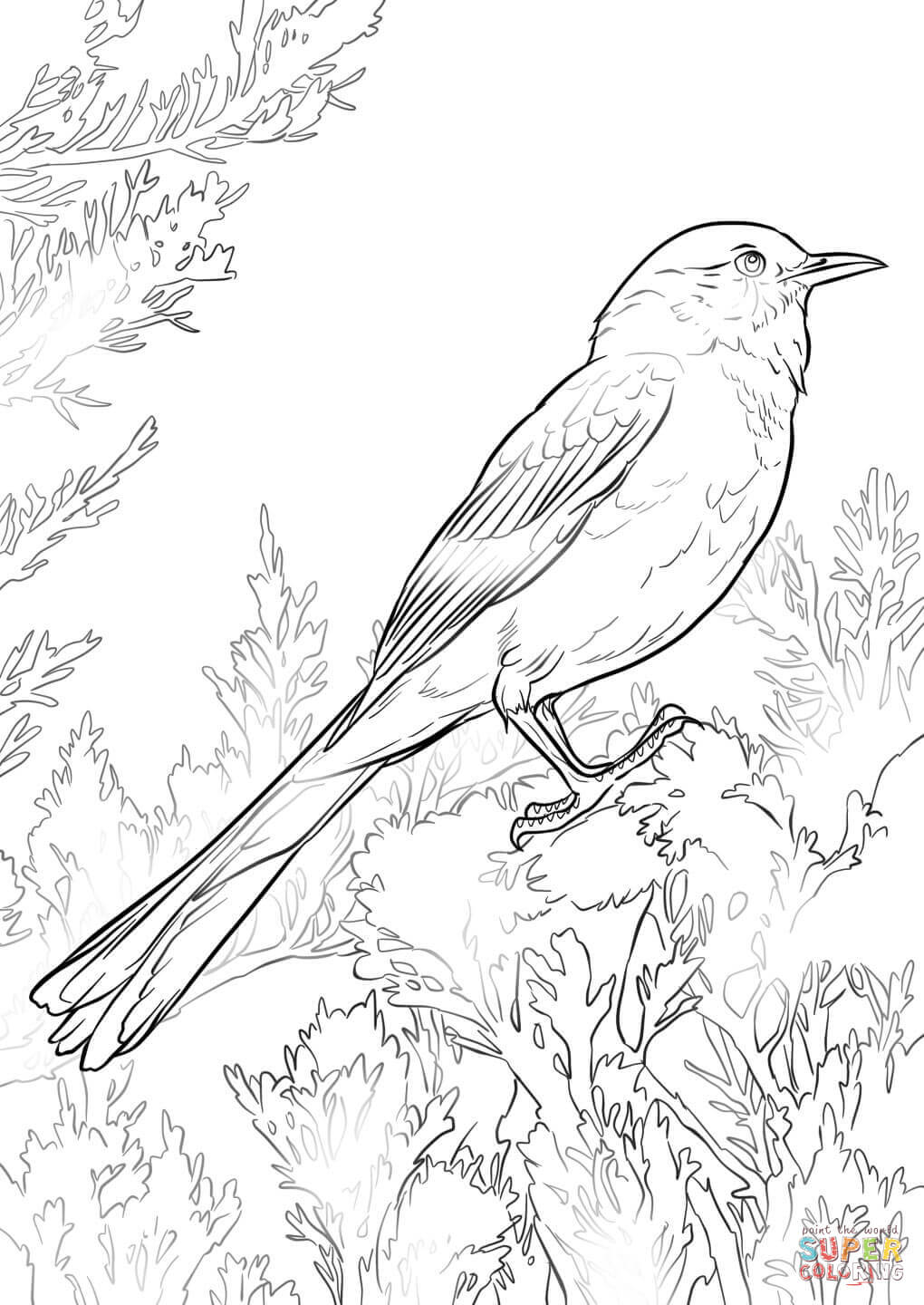 mockingbird coloring page realistic northern mockingbird coloring page free page mockingbird coloring