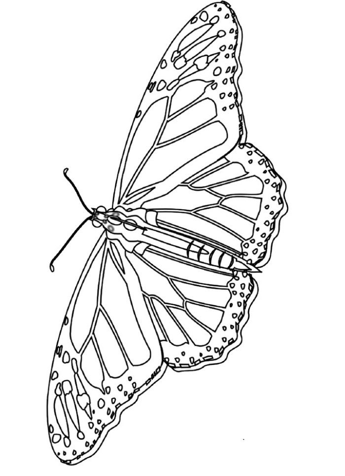 monarch butterfly coloring monarch butterfly coloring book adult drawing png coloring butterfly monarch