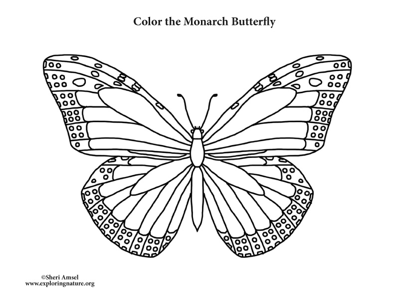 monarch butterfly coloring monarch butterfly coloring page coloring page book for kids butterfly coloring monarch