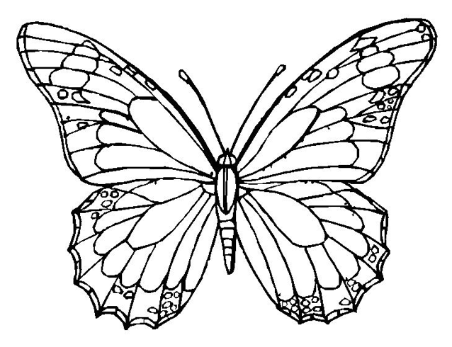 monarch butterfly coloring monarch butterfly coloring pages coloring home butterfly monarch coloring