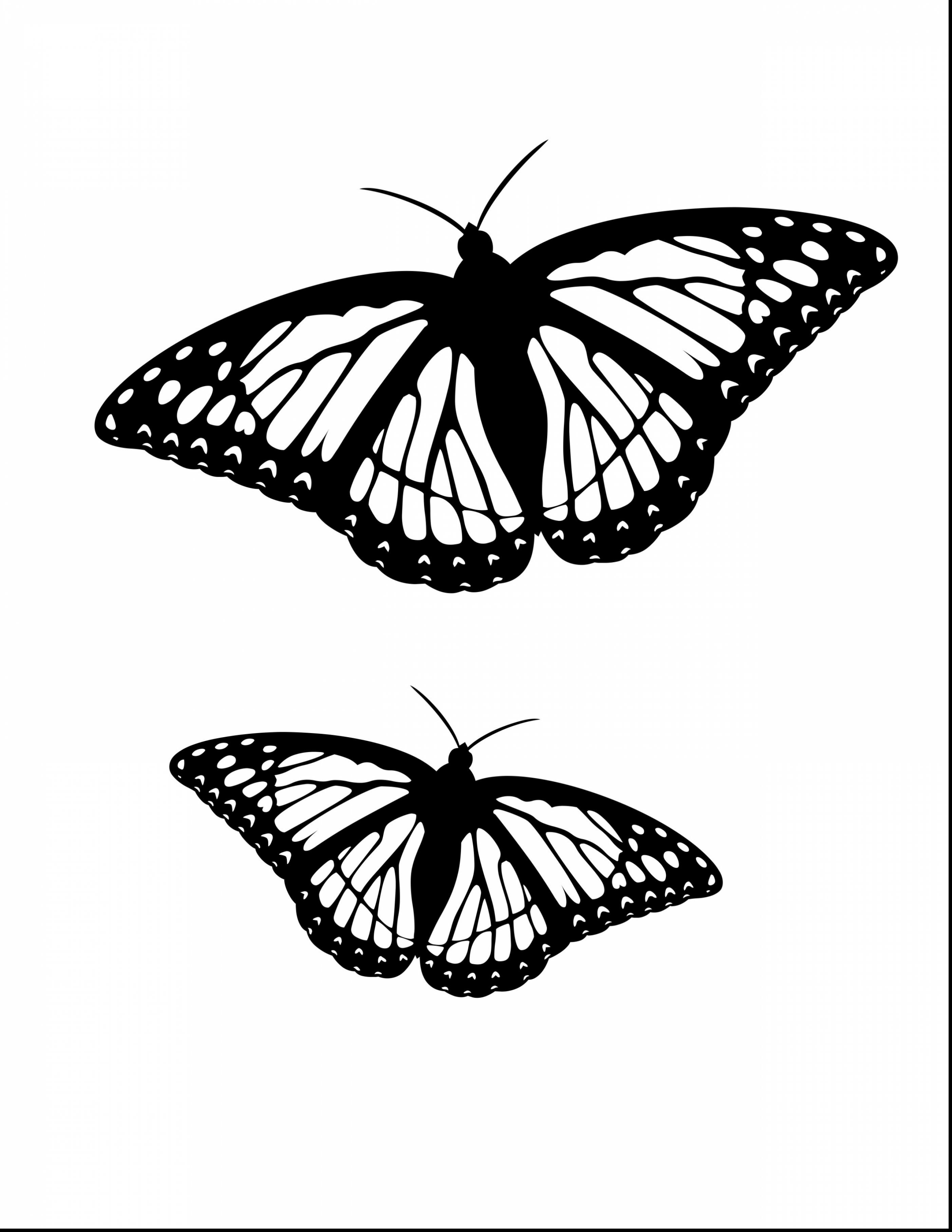 monarch butterfly coloring monarch butterfly coloring pages for kids gtgt disney monarch butterfly coloring