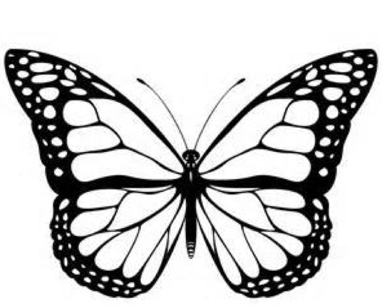 monarch butterfly coloring monarch butterfly outline drawing png clipart brush butterfly coloring monarch