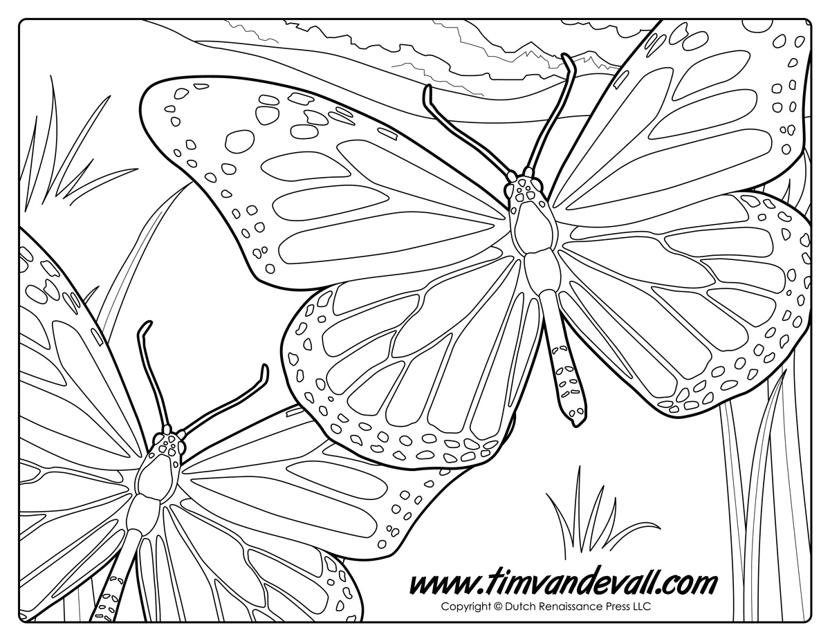 monarch butterfly coloring page monarch butterfly coloring page tim39s printables monarch page butterfly coloring