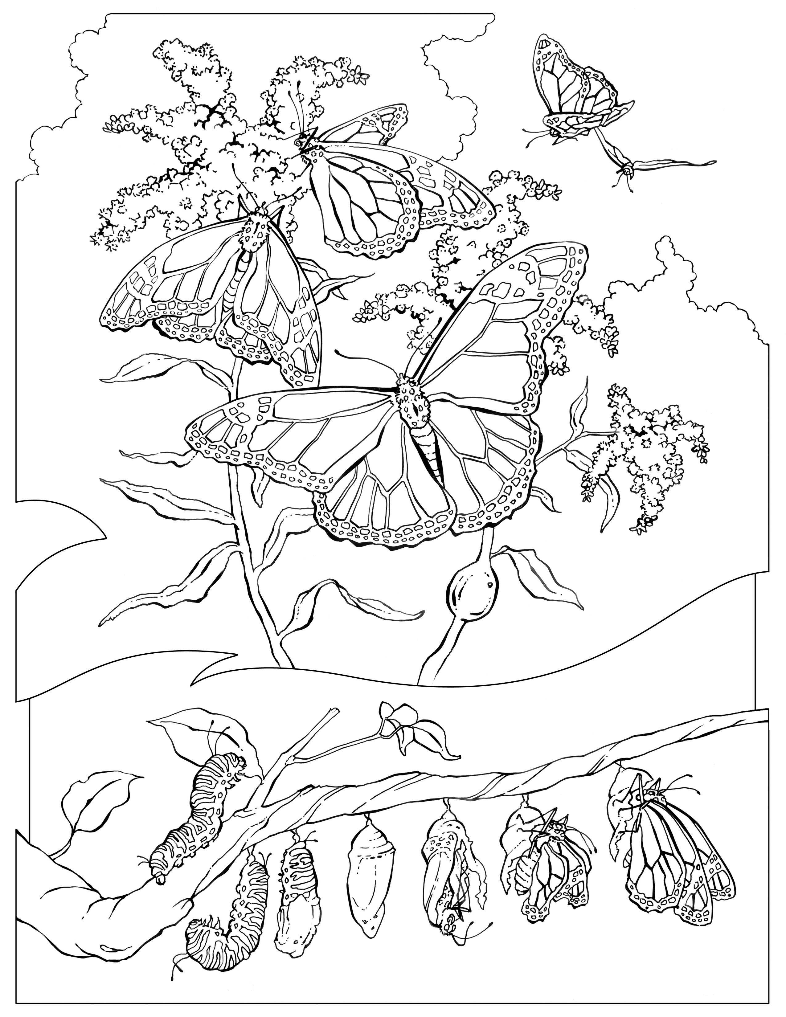 monarch butterfly coloring page monarch butterfly coloring pages all worksheets monarch coloring page butterfly