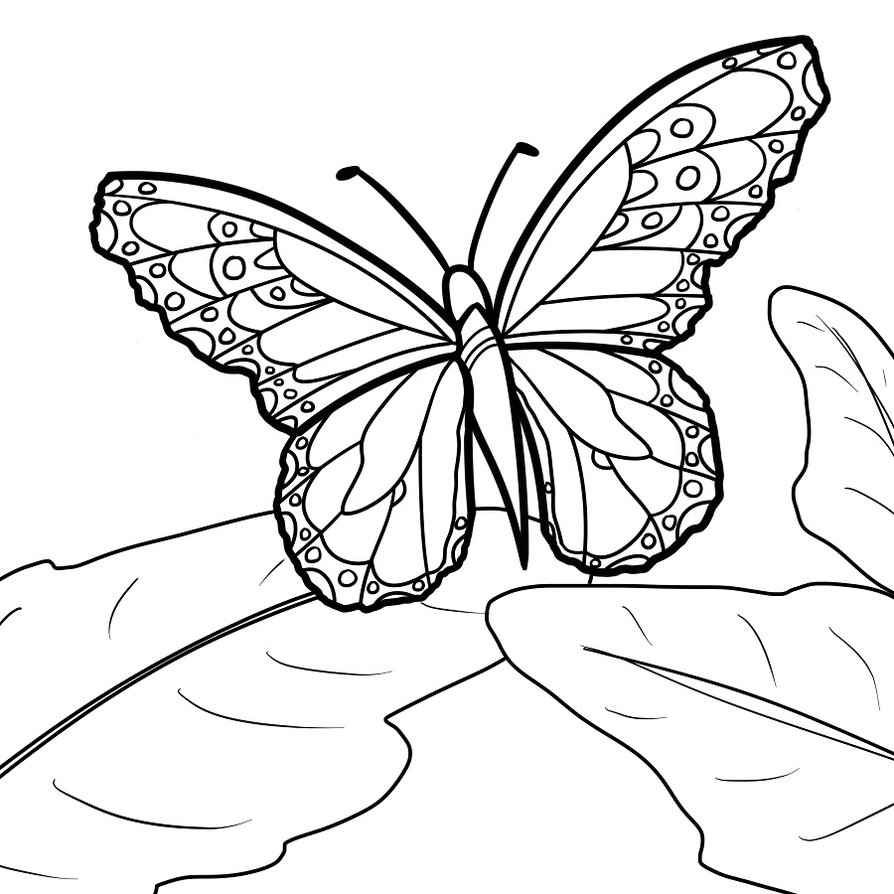 monarch butterfly coloring page monarch butterfly coloring pages to print free coloring coloring monarch page butterfly