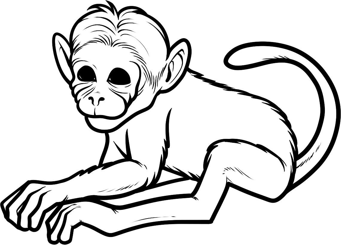 monkey clipart coloring best monkey outline 16597 clipartioncom coloring clipart monkey