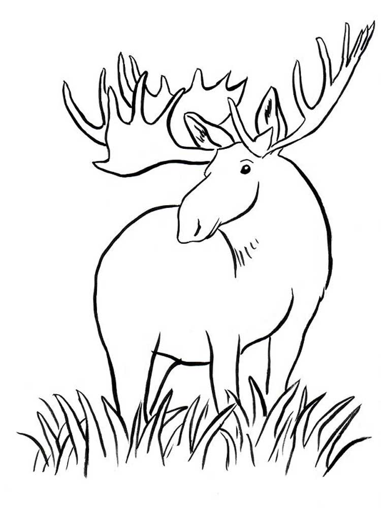 moose coloring free moose coloring pages download and print moose coloring moose