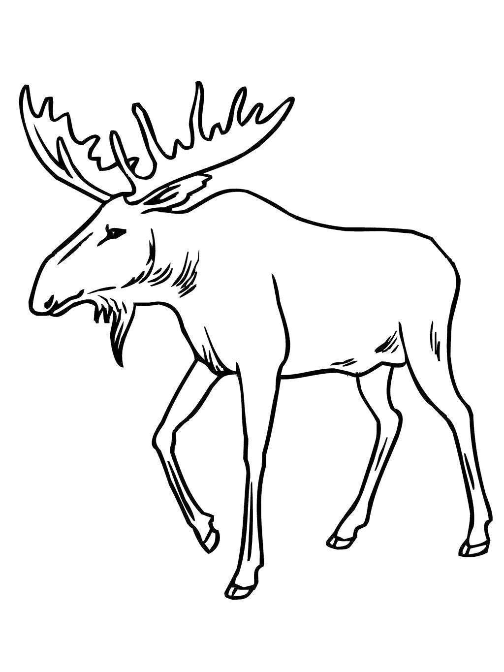 moose coloring moose 01 coloring page coloring page central coloring moose