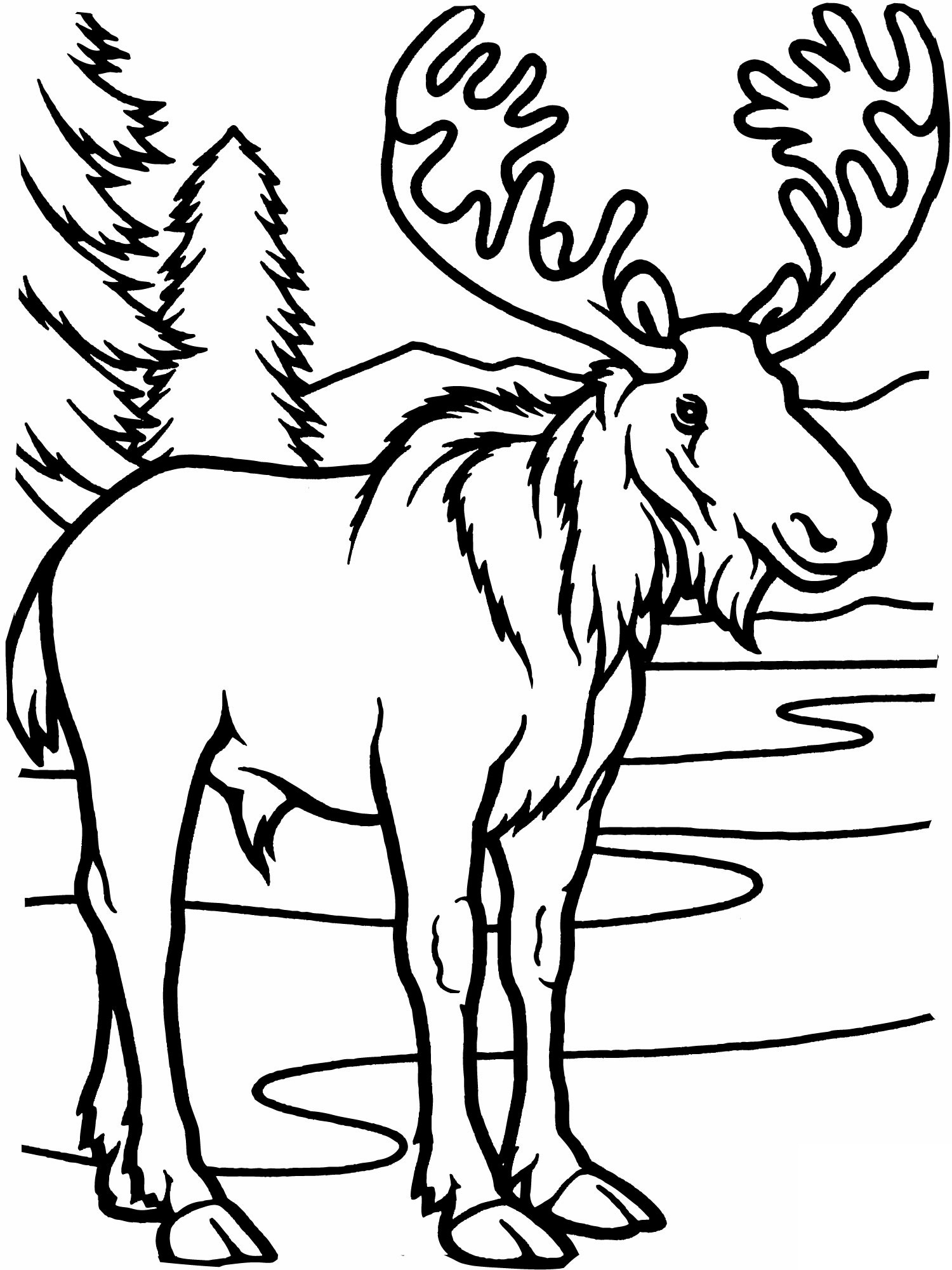 moose coloring page moose coloring pages to download and print for free moose coloring page