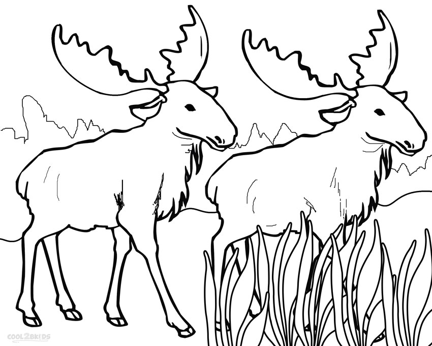 moose coloring page printable moose coloring pages for kids cool2bkids page coloring moose